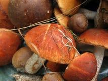 许多橙色盖帽牛肝菌蕈类,在堆的位置 切蘑菇 免版税库存照片