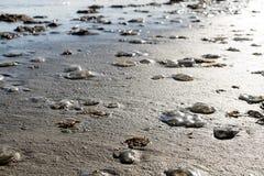 许多水母在海滩的梳形果子冻 墨西哥湾的海岸 得克萨斯 库存照片