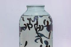 许多水蛭在水中被困住到玻璃瓶子,特写镜头 库存图片
