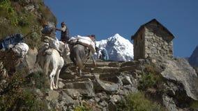 许多游人和搬运工在岩石卢克拉Namche道路登高并且下降在Manjo村庄附近 影视素材