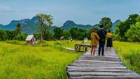 许多游人时间间隔在Lopburi,泰国参观开花与木桥的黄色波斯菊花 股票视频