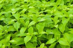 许多湿绿色叶子 图库摄影