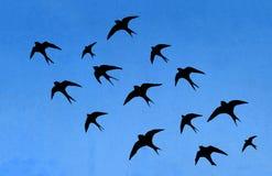 许多燕子剪影  库存照片