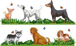 许多狗的类型在公园 库存例证