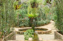 许多玫瑰在庭院里 免版税库存图片