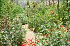 许多玫瑰在庭院里 库存照片