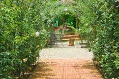 许多玫瑰在庭院里 免版税库存照片