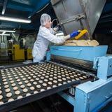 许多甜蛋糕食物工厂巨型的生产 免版税图库摄影
