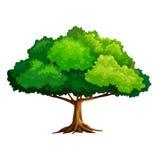 许多生态的图象我的投资组合结构树向量 皇族释放例证
