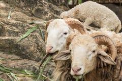 许多的农场动物 免版税库存图片