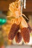 许多的玉米游廊 库存图片