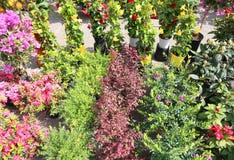 许多盆的花待售在花上地方市场  图库摄影