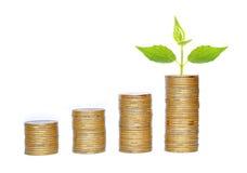 许多硬币在白色和绿色植物中隔绝的专栏 免版税库存照片