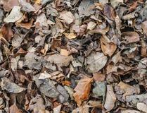 许多秋天干叶子背景 库存照片