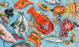 许多种类海鲜,服务在被击碎的冰 免版税库存照片