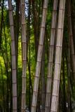 许多竹茎,竹树,垂直 免版税库存图片