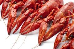 许多红色小龙虾 免版税库存图片