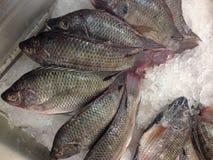 许多红色鱼结冰 免版税图库摄影