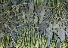 许多绿色芸苔硬花甘蓝叫Broccolo Fiolaro fr 免版税库存图片
