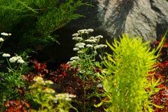 许多美丽的植物和花在自然石头背景  风景设计的概念在高地的公开 库存照片