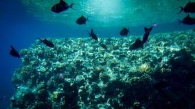 许多美丽的水下的照片游泳在大珊瑚礁附近的五颜六色的热带鱼在海 库存照片
