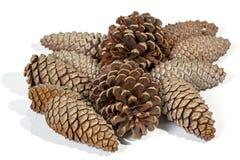 许多自然棕色松树锥体样式和纹理 库存图片