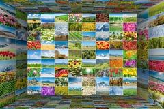 许多自然照片拼贴画  免版税库存图片