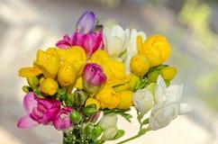 许多色的花束小苍兰开花,窗口bokeh背景 图库摄影