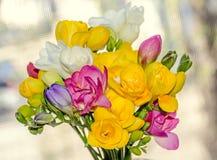 许多色的花束小苍兰开花,窗口bokeh背景 免版税库存照片