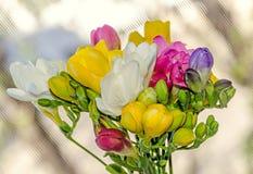 许多色的花束小苍兰开花,窗口bokeh背景 库存照片