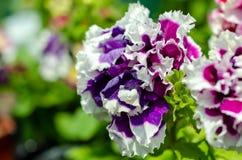 许多花不同颜色在夏天 免版税库存图片