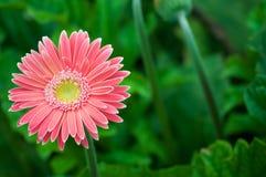 许多花在花园里 免版税库存图片