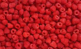许多莓 免版税库存图片