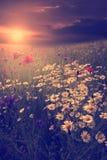 许多葡萄酒照片在日落的野花 免版税库存图片