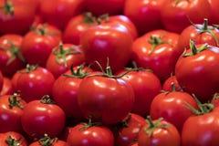 许多蕃茄背景  免版税图库摄影
