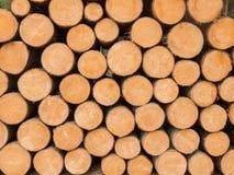 许多被堆积的木树干 免版税库存图片