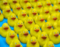 许多迷人玩具一点黄色橡胶鸭子巴恩玩具 选择聚焦 库存照片