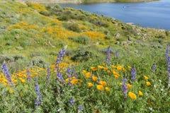 许多野花在金刚石Valley湖进展 库存照片