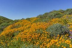 许多野花在金刚石Valley湖进展 免版税图库摄影
