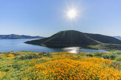 许多野花在金刚石Valley湖进展 免版税库存图片