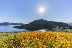 许多野花在金刚石Valley湖进展 免版税库存照片