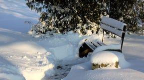 许多雪在公园 库存图片