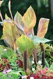 许多颜色植物  库存图片