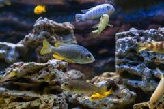 许多鱼特写镜头  库存图片