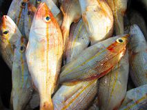 许多鲜鱼 库存图片