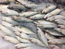 许多鲭鱼在市场上 库存照片