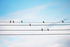 许多鸟 库存图片