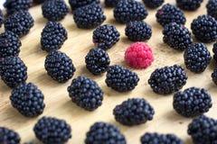 许多黑莓和一个莓的鲜美水多的莓果混合 库存图片
