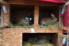 许多年轻兔宝宝在棚子 一个小组小兔子输入脱粒场 复活节标志 免版税库存照片