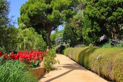 许多绿叶在植物园的公园 库存照片